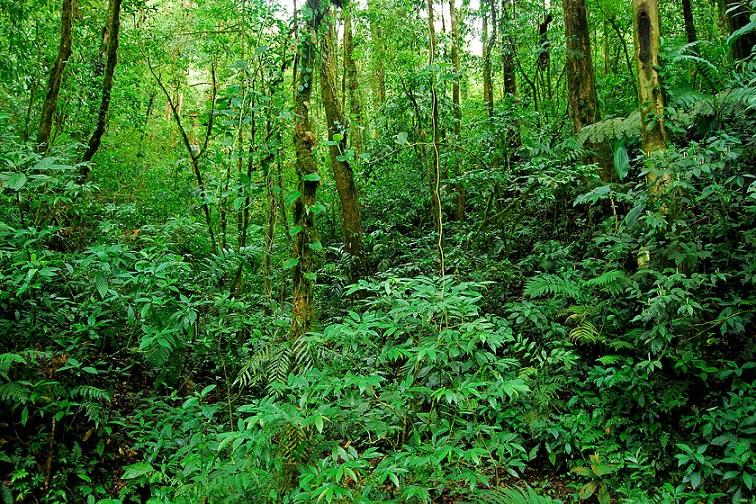 Công tác phủ xanh, bảo vệ rừng luôn là nhiệm vụ ...