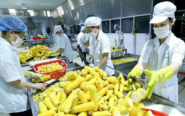 Hỗ trợ doanh nghiệp miền Trung xuất khẩu bền vững sang Trung Quốc