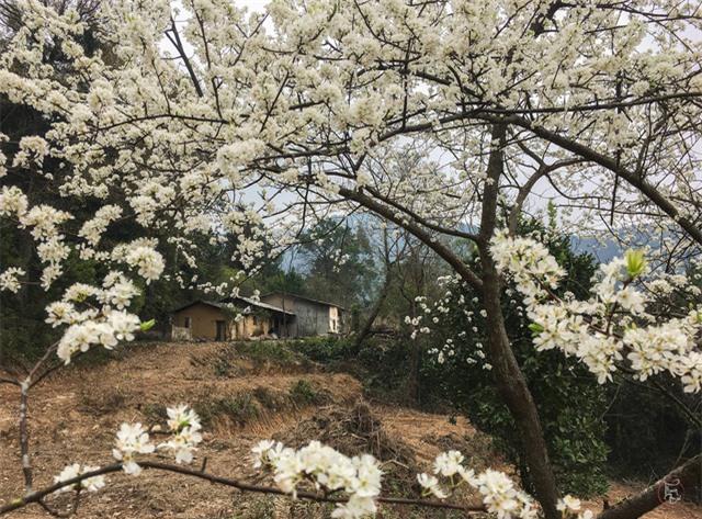 Vẻ đẹp bốn mùa trên núi Mẫu Sơn - Ảnh 18.