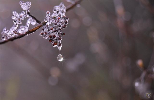 Vẻ đẹp bốn mùa trên núi Mẫu Sơn - Ảnh 17.