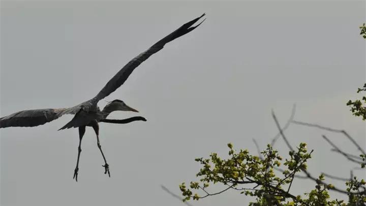Kinh hoàng khoảnh khắc con lươn xé toạc diều kẻ săn mồi để thoát thân - Ảnh 2.