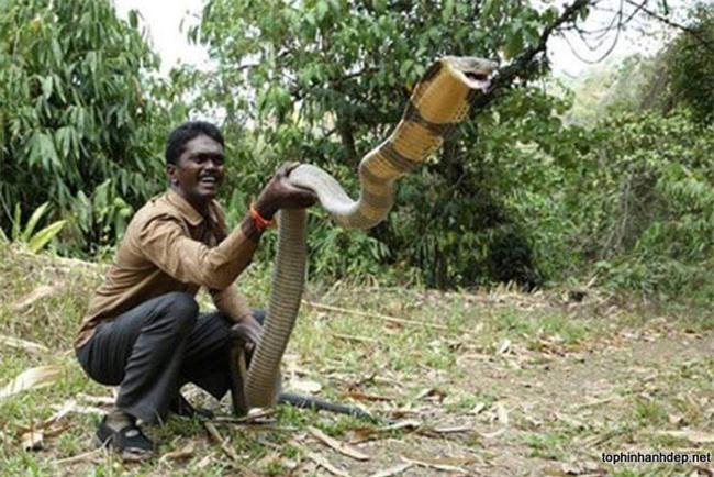 Những 'kỷ lục gia' đáng sợ trong thế giới loài rắn: Từ độc nhất tới dài nhất, cá thể nào cũng khiến con người phải rùng mình - Ảnh 2.