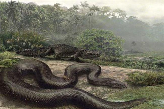 Những 'kỷ lục gia' đáng sợ trong thế giới loài rắn: Từ độc nhất tới dài nhất, cá thể nào cũng khiến con người phải rùng mình - Ảnh 7.