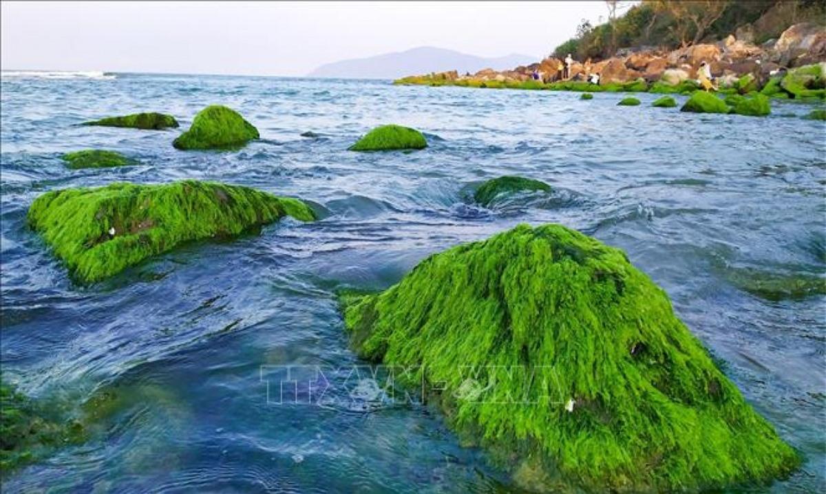 Những tảng đá phủ đầy rêu xanh mướt hiện ra khi thủy triều rút.