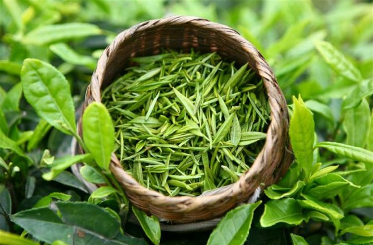 Từ bỏ ngay 3 cách uống trà gây hại thận, hại dạ dày mà người Việt thường mắc phải, thậm chí gây ung thư - Ảnh 4.