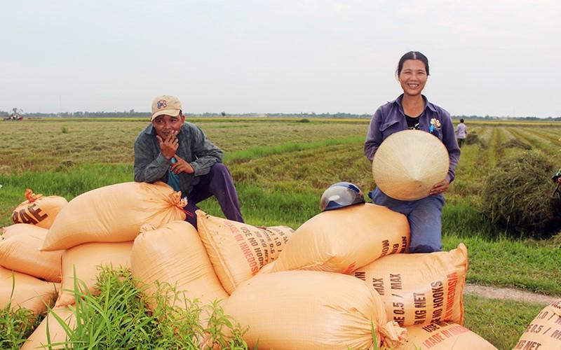 Nông dân vui mừng vì lúa đạt năng suất cao, giá thành hợp lý.