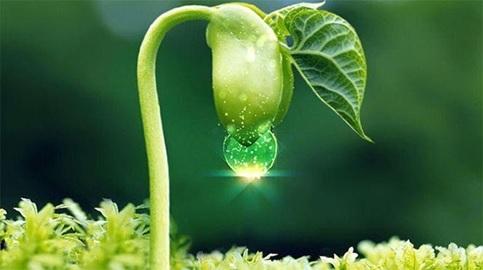 Sản phẩm chứa tinh chất mầm đậu nành giúp cải thiện tình trạng khô hạn