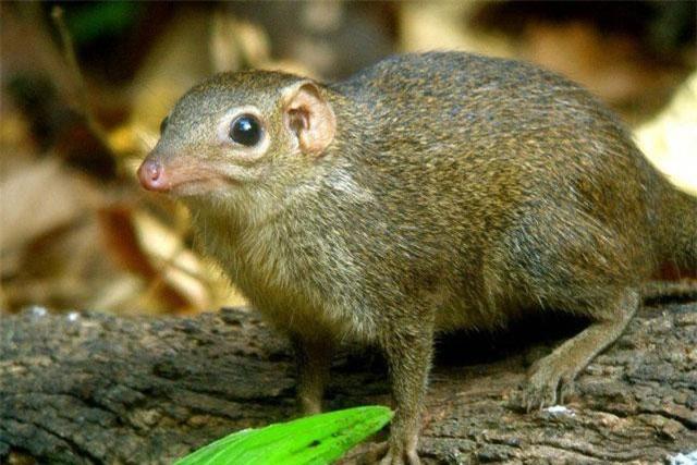 Khám phá Top 5 'tiên tửu' trong thế giới động vật hoang dã ảnh 1