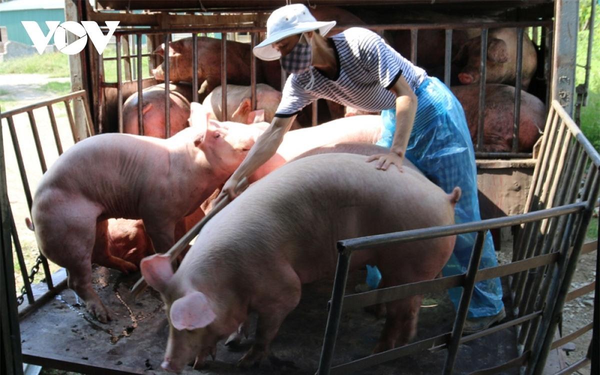 Hộ nghèo không phải nộp phí trong chăn nuôi. (Ảnh minh họa)