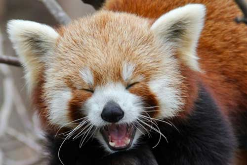 """Khi động vật """"mỉm cười"""" và khiến một ngày của bạn tươi sáng hơn"""