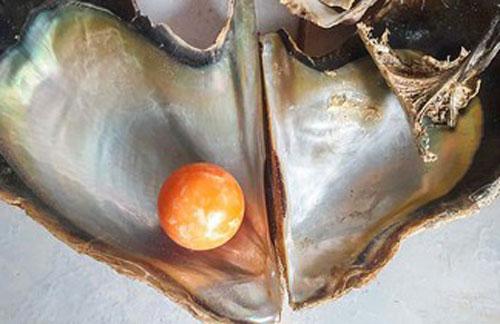 Được 'bụt báo mộng', ngư dân tìm thấy viên ngọc trai màu cam giá gần 8 tỉ đồng
