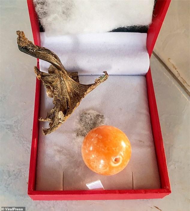 Được 'bụt' báo mộng, ngư dân tìm thấy viên ngọc trai màu cam giá gần 8 tỉ ảnh 4
