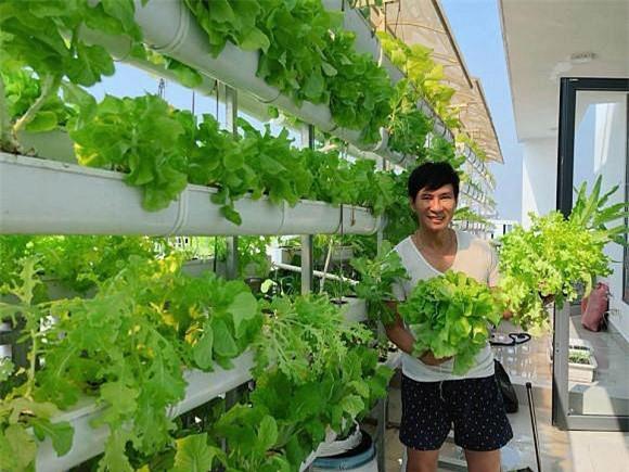 Khu vườn trồng nhiều loại rau xanh theo kiểu chăm sóc hữu cơ