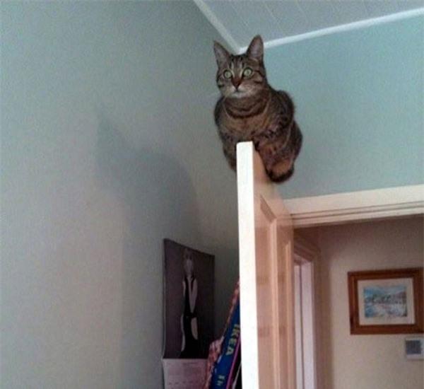 Một bằng chứng khẳng định khả năng giữ thăng bằng đỉnh cao của loài mèo.