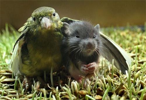 Chú chim đang che chở cho người bạn của mình, tinh thần tương thân tương ái là đây chứ đâu.