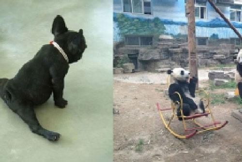 12 bức ảnh vui chứng minh động vật cũng có thể làm được những điều không tưởng