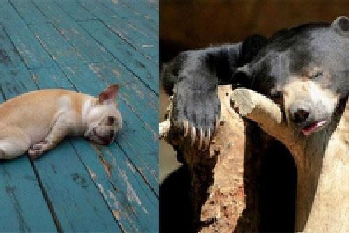 Những hình ảnh động vật cũng rũ rượi như người say khiến ai nhìn thấy cũng phải ôm bụng cười