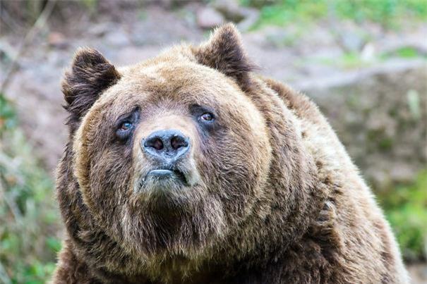 Tui muốn có gấu...