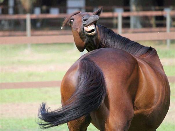 Chú ngựa siêu ngố
