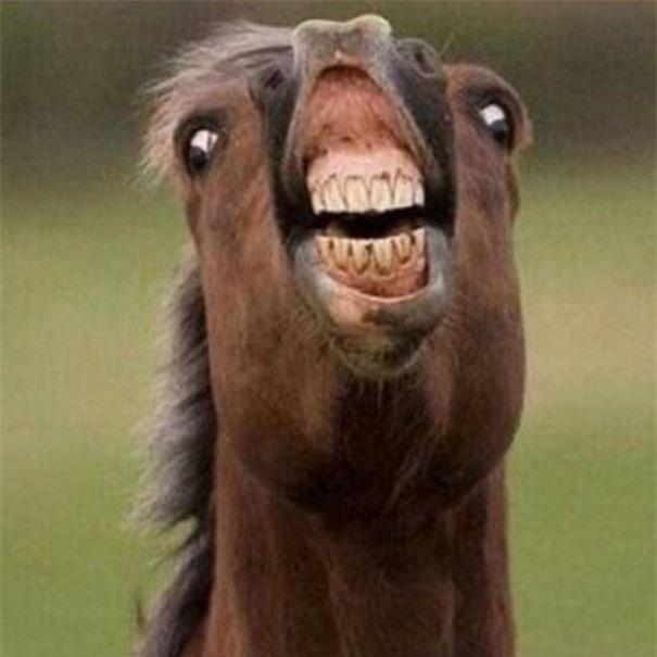 Khi bạn bị bắt cười tạo dáng
