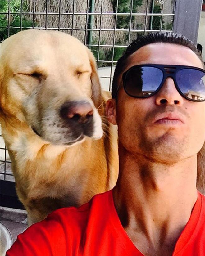 Soi cún cưng của các siêu sao: Ronaldo dùng chó để tán gái, Messi thì sở hữu anh bạn cực bự nhưng chó của Beckham mới là sướng nhất - Ảnh 1.
