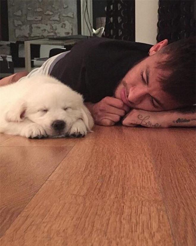 Soi cún cưng của các siêu sao: Ronaldo dùng chó để tán gái, Messi thì sở hữu anh bạn cực bự nhưng chó của Beckham mới là sướng nhất - Ảnh 5.