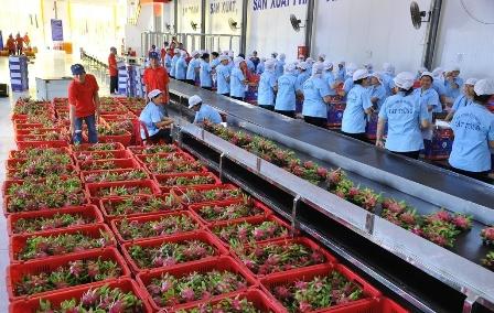 Nâng cao giá trị nông sản qua chế biến để gia tăng giá trị sản phẩm