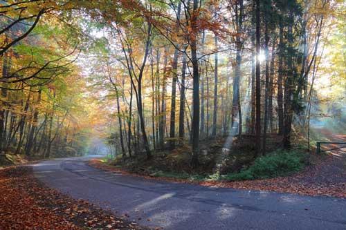 Vào rừng ngắm mùa thu tuyệt đẹp khiến bạn quên lối về
