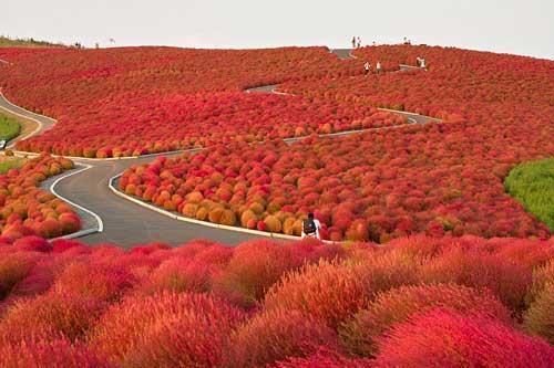 Những lí do bạn nên ghé thăm Nhật Bản