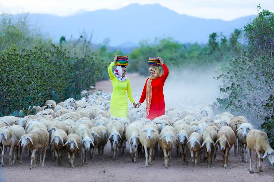 Theo danh sách đơn vị hành chính của Tổng cục Thống kê, Ninh Thuận hiện là tỉnh duy nhất trong cả nước chỉ có 3 thị trấn. Đó là thị trấn Tân Sơn (huyện Ninh Sơn), thị trấn Khánh Hải (huyện Ninh Hải) và thị trấn Phước Dân (huyện Ninh Phước). Ảnh: Vũ Minh Quân.