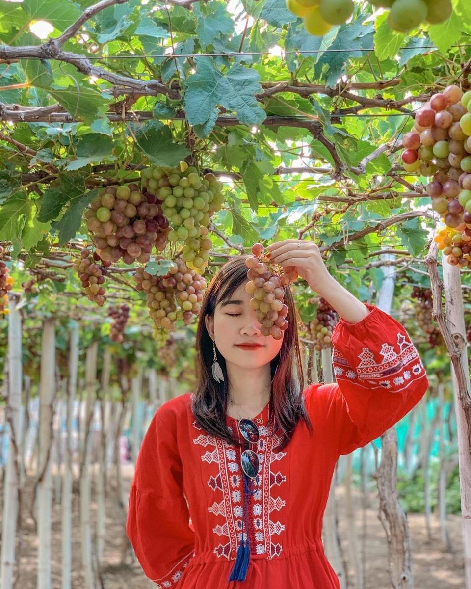 Đến huyện Ninh Hải, du khách có thể thăm làng nho Thái An xanh mát, trĩu quả. Ngoài chụp hình check-in, bạn đừng quên thưởng thức mật nho hấp dẫn hay mua mứt rong về làm quà. Ảnh: Sơn Trịnh.