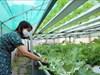 Người tiêu dùng Ngày Khoa học và Công nghệ Việt Nam 18/5: Khi 'dân công nghệ' đi làm nông