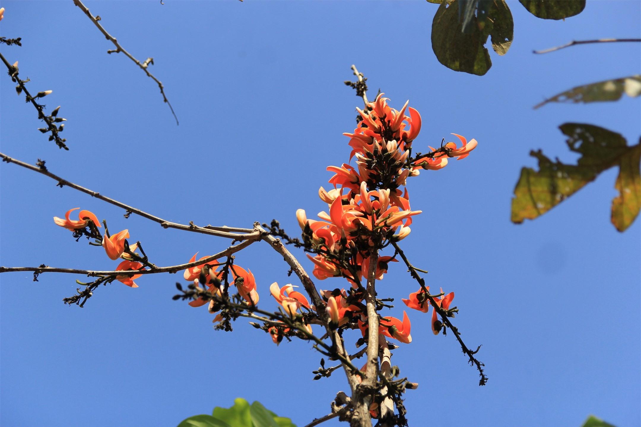 Ngắm loài hoa 'độc nhất vô nhị' ở Tây Nguyên ảnh 3