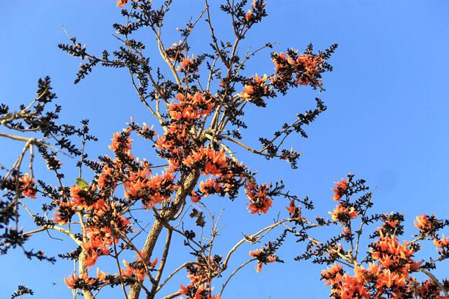 Ngắm loài hoa 'độc nhất vô nhị' ở Tây Nguyên
