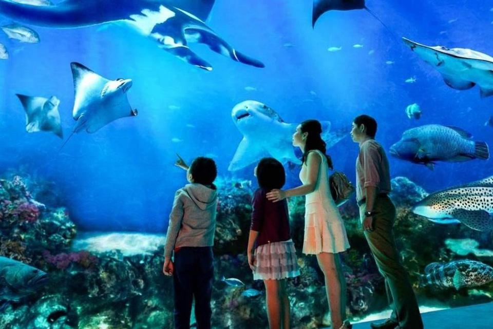 Nằm trên đảo Sentosa, khu thủy cung S.E.A. Aquarium là một tổ hợp công viên đại dương, trưng bày hơn 100.000 sinh vật biển, thuộc 800 loài và hơn 20.000 loại san hô với sức chứa lên tới 45 triệu lít nước. Thủy cung cũng sở hữu dòng sông lười dài nhất thế giới (620m) và bộ sưu tập cá đuối lớn nhất thế giới. Đây cũng là một trong những điểm du lịch hấp dẫn nhất của Singapore. Ảnh: Sentosa.com.