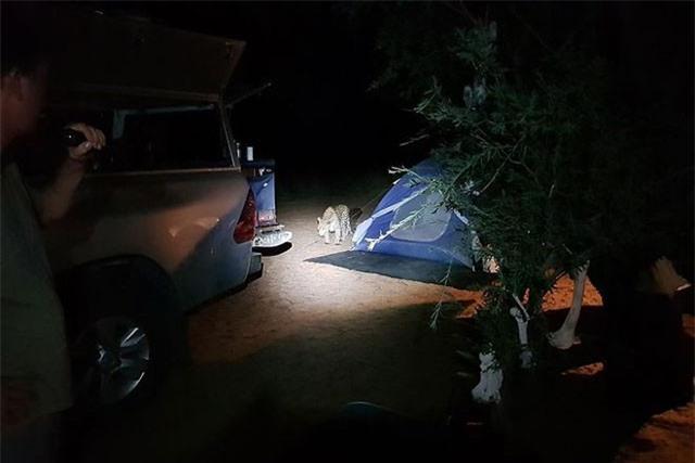 Báo hoa mai tấn công người cắm trại qua đêm ảnh 2