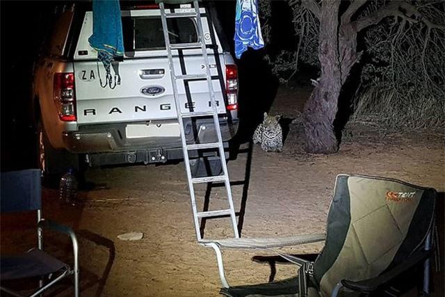 Báo hoa mai tấn công người cắm trại qua đêm ảnh 3