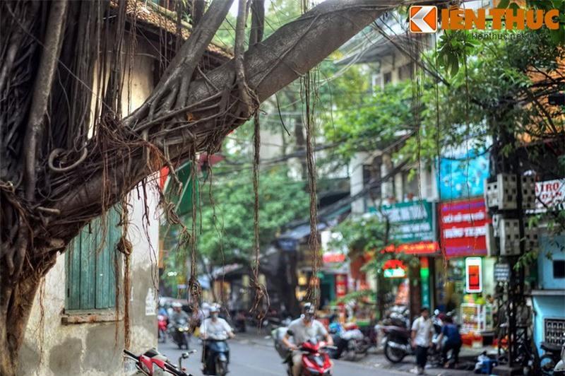 Kham pha an tuong ve con pho co dac san hot nhat Ha Noi-Hinh-21