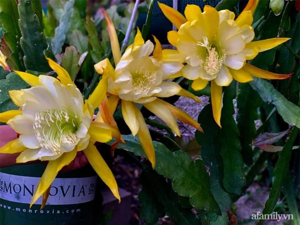 Khu vườn rực rỡ quanh năm với 200 loài quỳnh khoe sắc của mẹ Việt ở Mỹ - Ảnh 12.