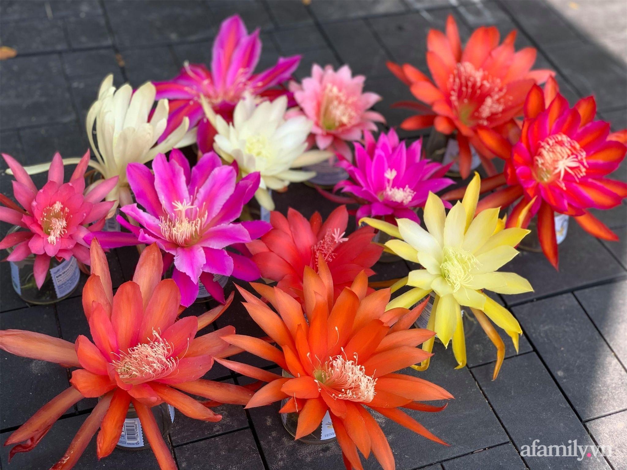 Khu vườn rực rỡ quanh năm với 200 loài quỳnh khoe sắc của mẹ Việt ở Mỹ - Ảnh 13.
