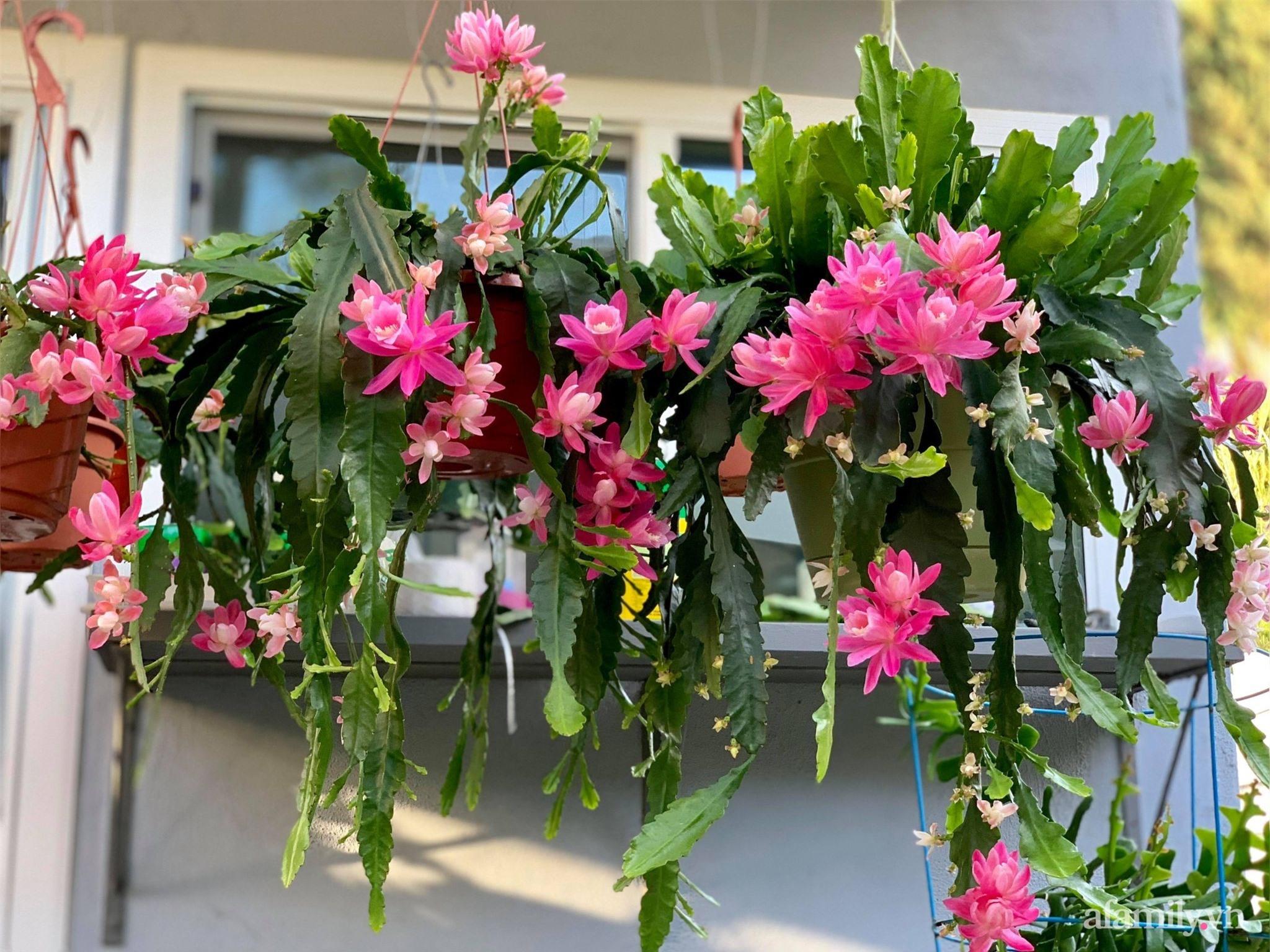 Khu vườn rực rỡ quanh năm với 200 loài quỳnh khoe sắc của mẹ Việt ở Mỹ - Ảnh 5.