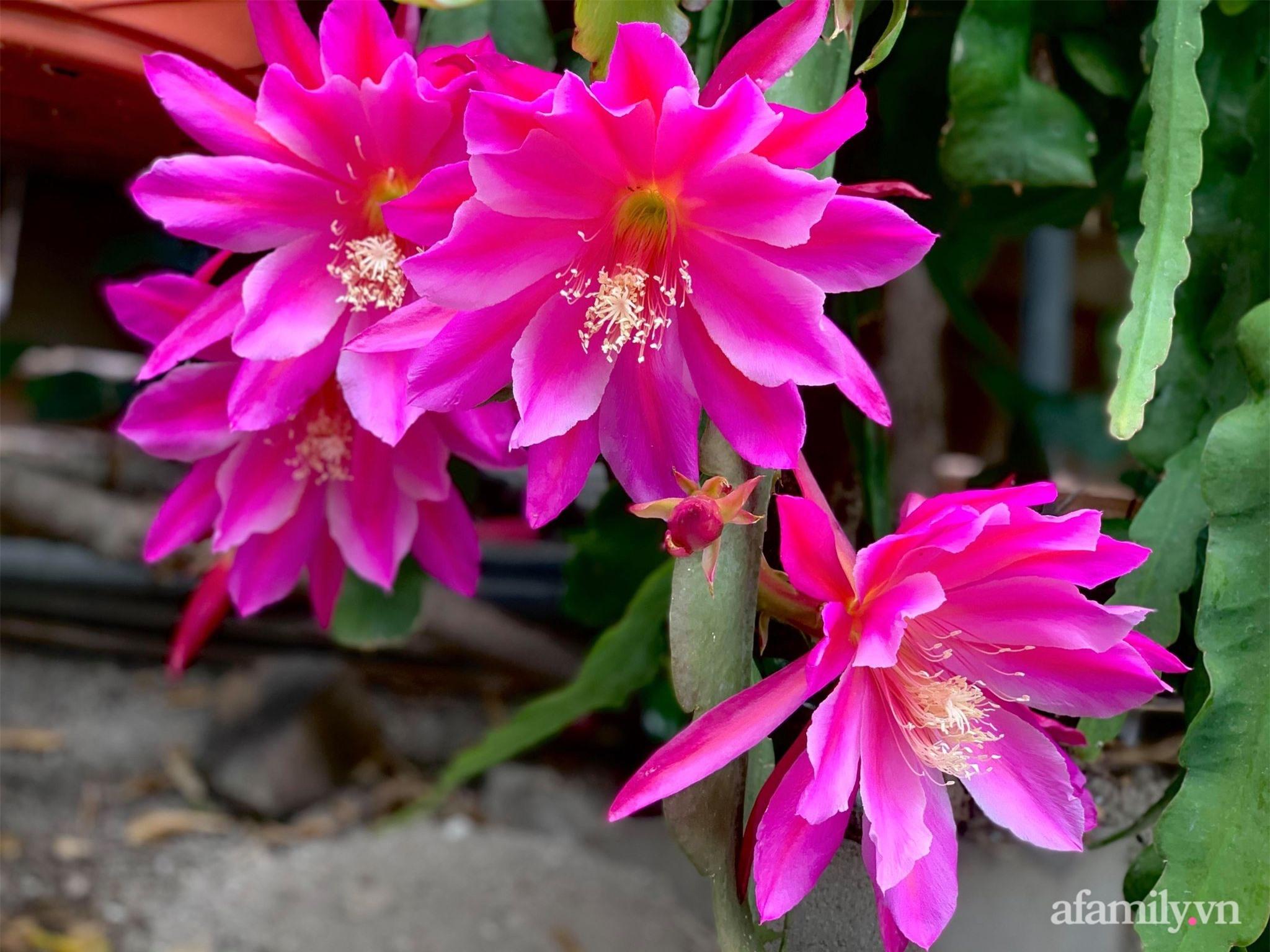 Khu vườn rực rỡ quanh năm với 200 loài quỳnh khoe sắc của mẹ Việt ở Mỹ - Ảnh 9.