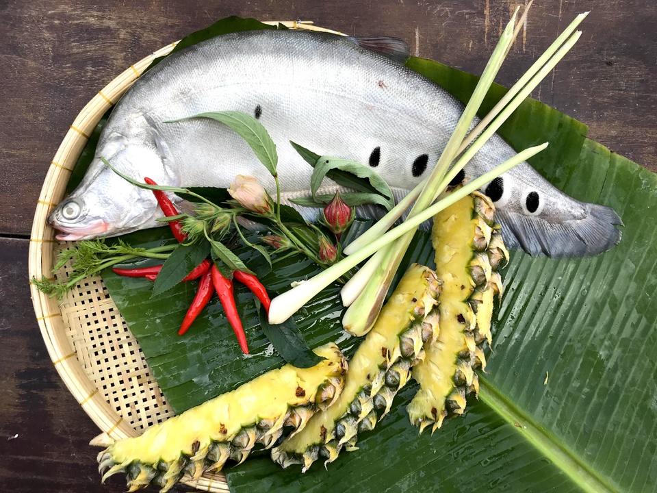 Cá thát lát cườm có chất lượng thịt thơm ngon, giá trị kinh tế cao. Loại cá này đầu nhỏ, thân dài, dẹp hai bên, mỏng về phía bụng, lưng gù, đặc biệt có màu xám bạc với những đốm đen, viền trắng đặc trưng. Ảnh: Hậu Giang Farm.