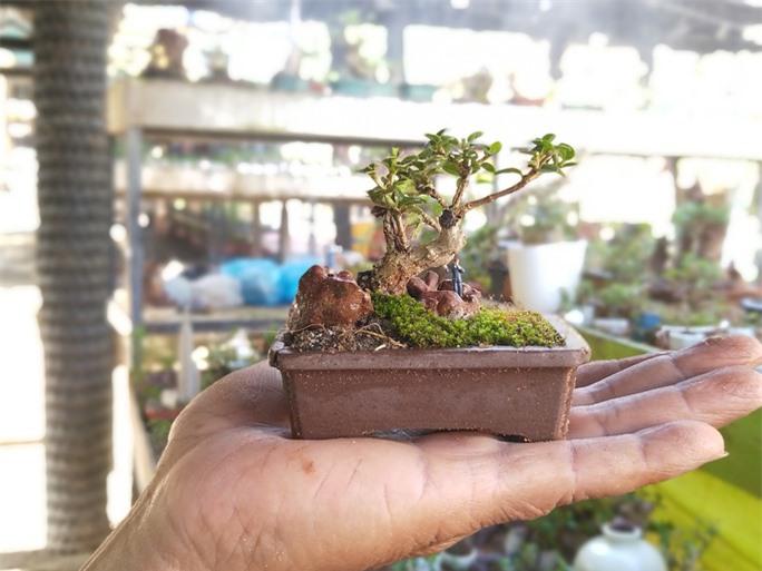 Chiêm ngưỡng bộ sưu tập kỷ lục thế giới 5.600 cây bonsai và tiểu cảnh mini - Ảnh 1.