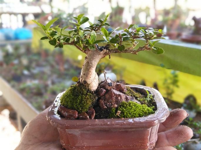 Chiêm ngưỡng bộ sưu tập kỷ lục thế giới 5.600 cây bonsai và tiểu cảnh mini - Ảnh 2.