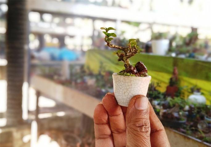 Chiêm ngưỡng bộ sưu tập kỷ lục thế giới 5.600 cây bonsai và tiểu cảnh mini - Ảnh 3.