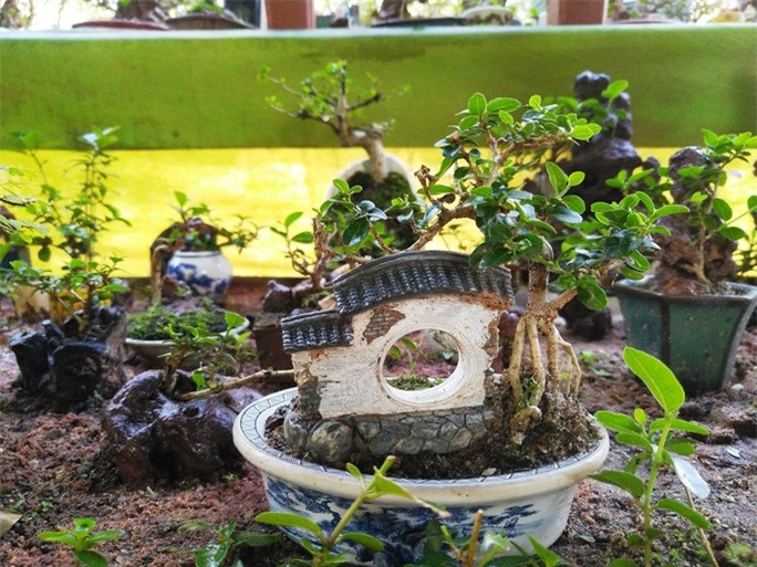 Chiêm ngưỡng bộ sưu tập kỷ lục thế giới 5.600 cây bonsai và tiểu cảnh mini - Ảnh 6.