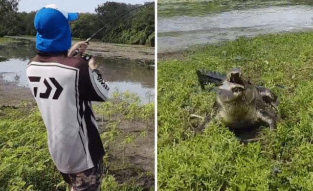 Cá sấu cướp cá của cần thủ.