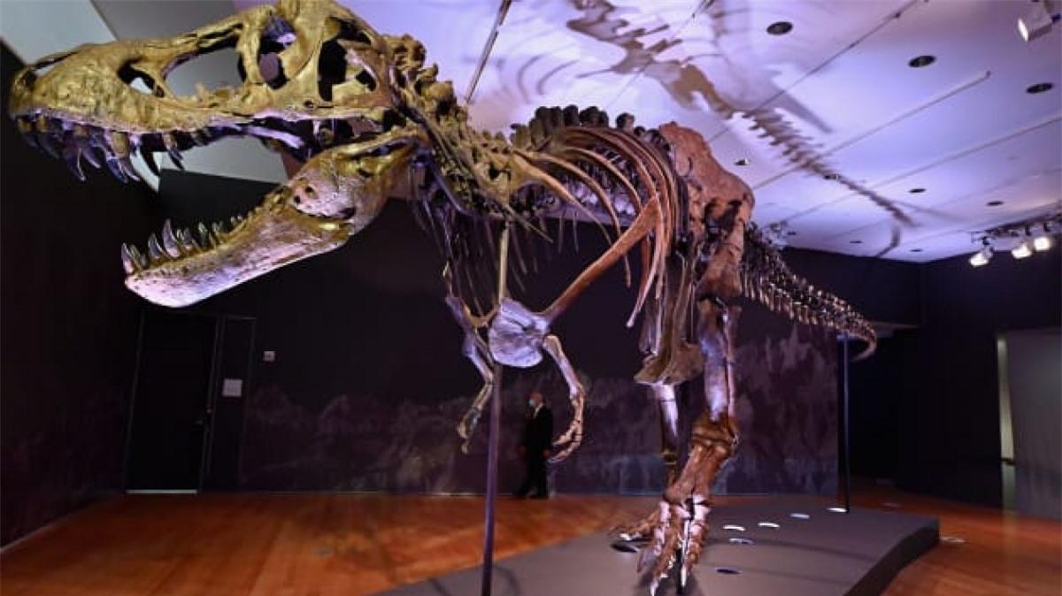 Hóa thạch khủng long Tyrannosaurus có biệt danh Stan, được bán đấu giá 31,85 triệu USD đã trở thành hóa thạch khủng long đắt nhất từng được bán.