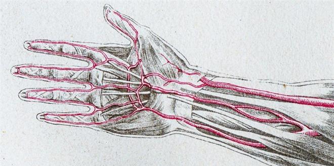 Loài người vẫn đang tiếp tục tiến hóa, bạn có thể có thêm một động mạch trong cơ thể và nó đang phát triển rất nhanh chóng - Ảnh 2.